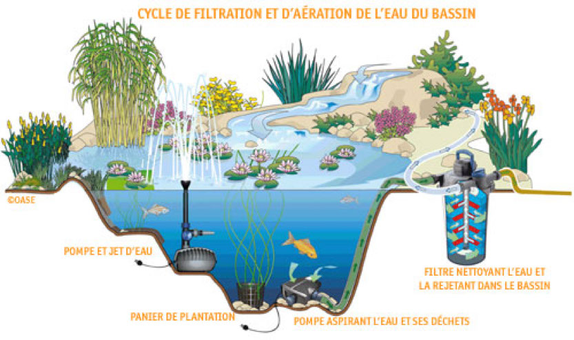 Bassin a poisson rouge for Filtre bassin poissons rouges